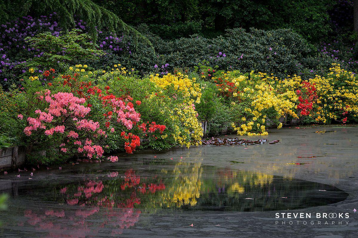 Norfolk photographer steven brooks photographs the water gardens on the Stody Lodge estate in Norfolk