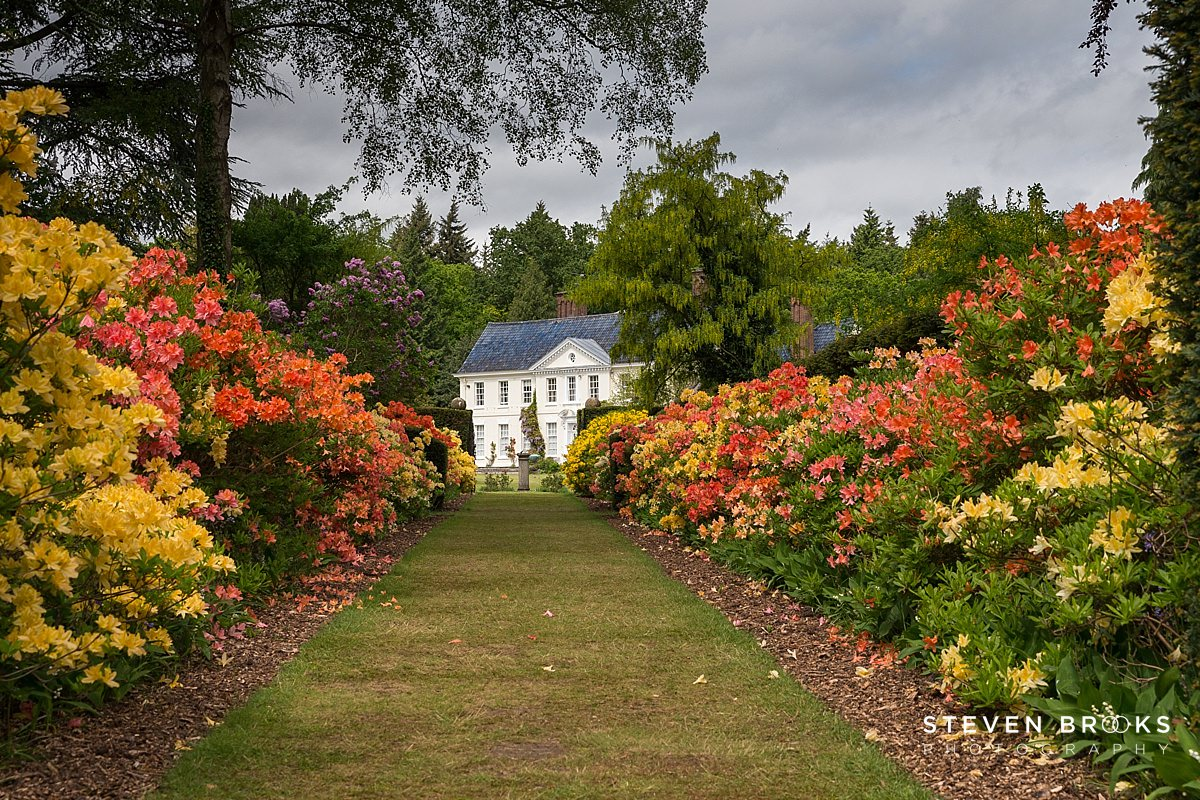Norfolk photographer steven brooks photographs an azalea row leading to the lodge on the Stody Lodge estate in Norfolk